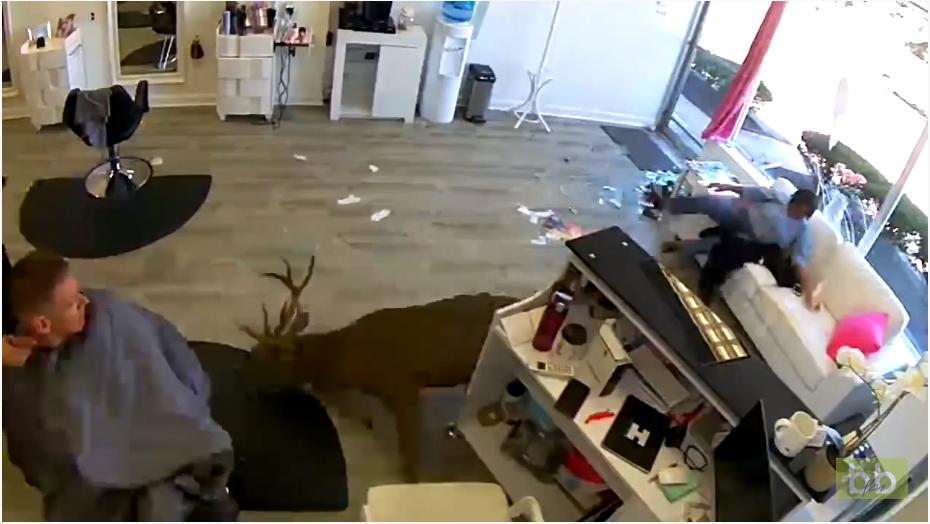 Un cerf explose un salon de coiffure à New-York