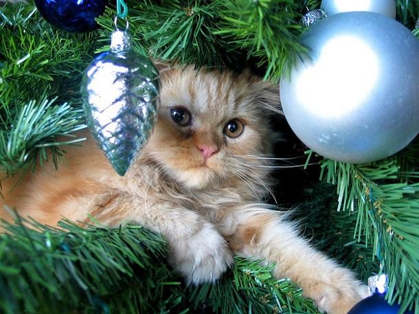 Quand les chats s'attaquent au sapin de Noël