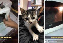 chaton au micro-ondes