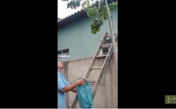 La pire méthode pour se débarrasser d'un nid de guêpes...